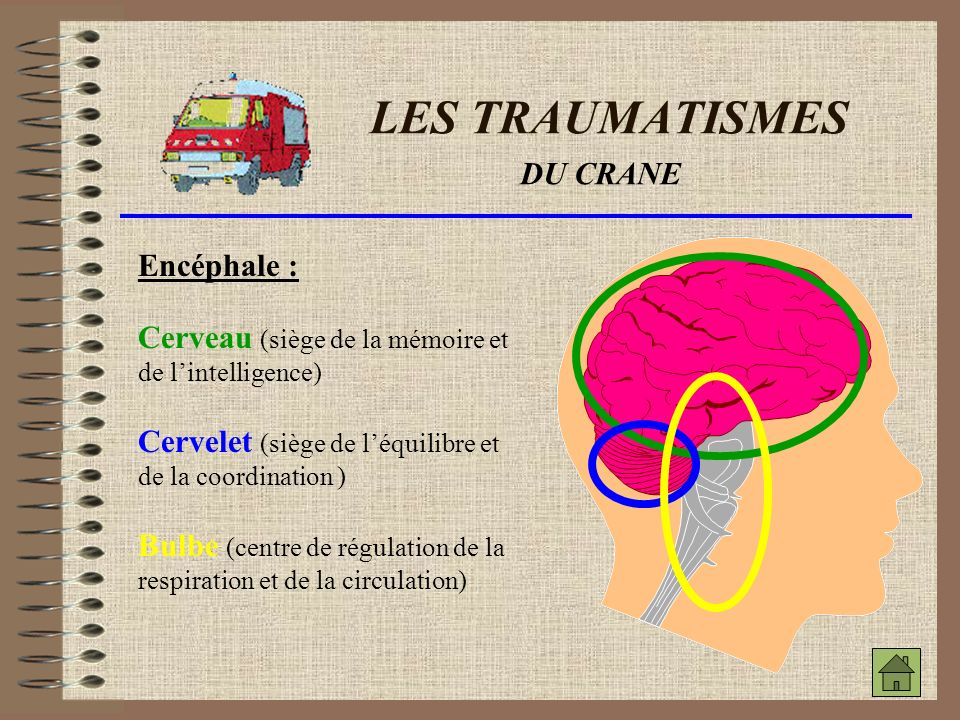 LES TRAUMATISMES DU CRANE Encéphale :