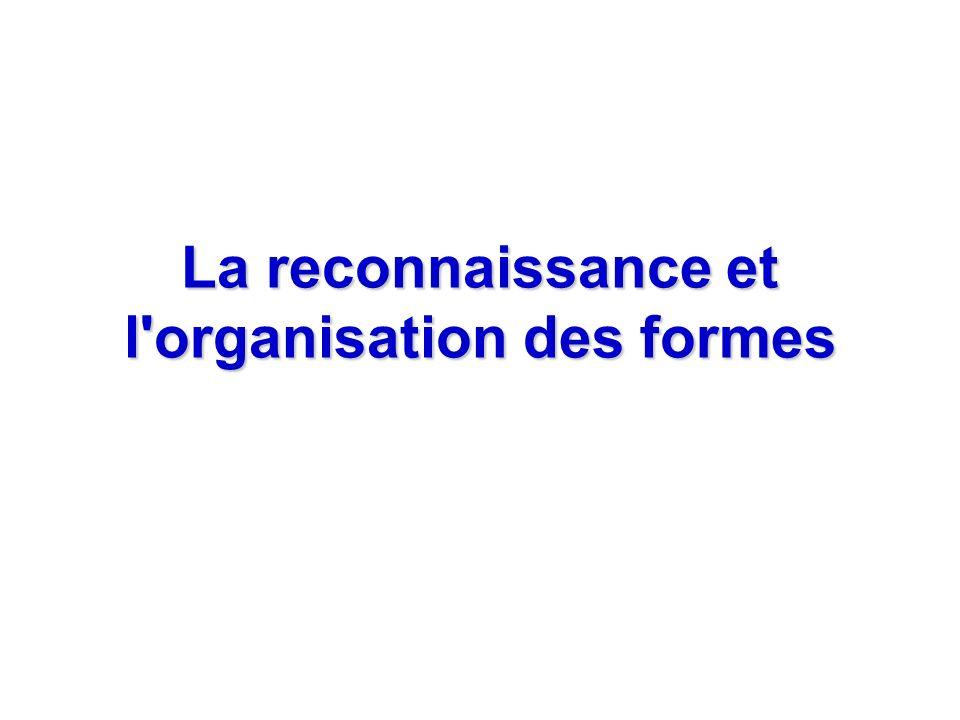 La reconnaissance et l organisation des formes