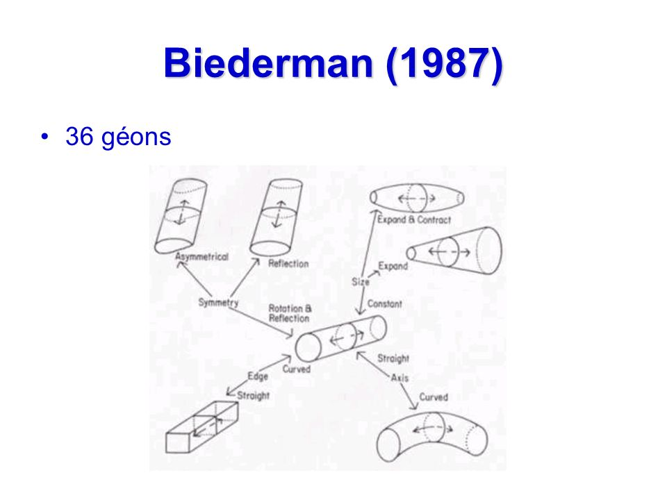 Biederman (1987) 36 géons