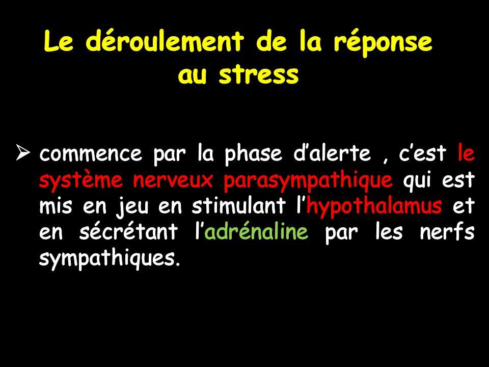Le déroulement de la réponse au stress