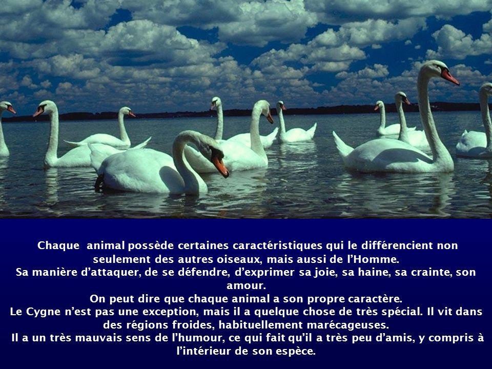 On peut dire que chaque animal a son propre caractère.