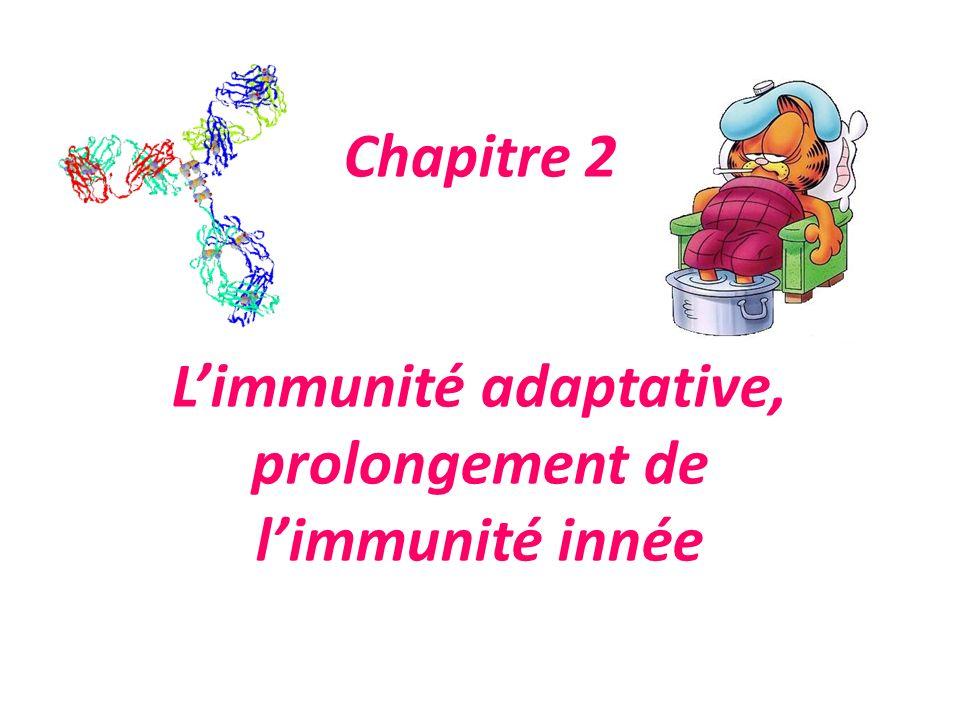 Chapitre 2 L'immunité adaptative, prolongement de l'immunité innée