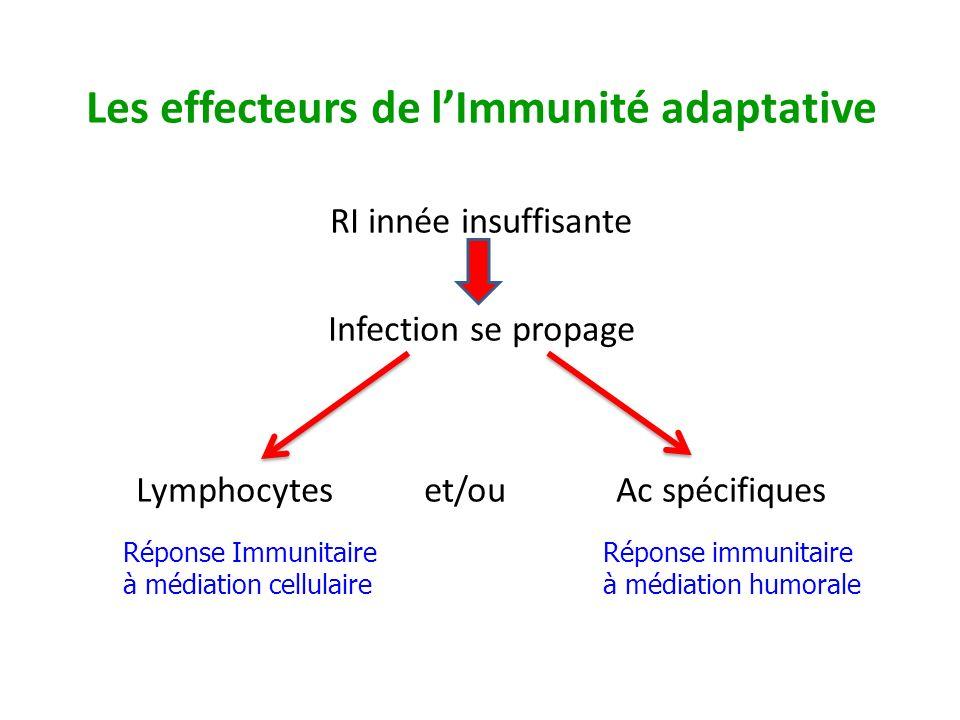 Les effecteurs de l'Immunité adaptative