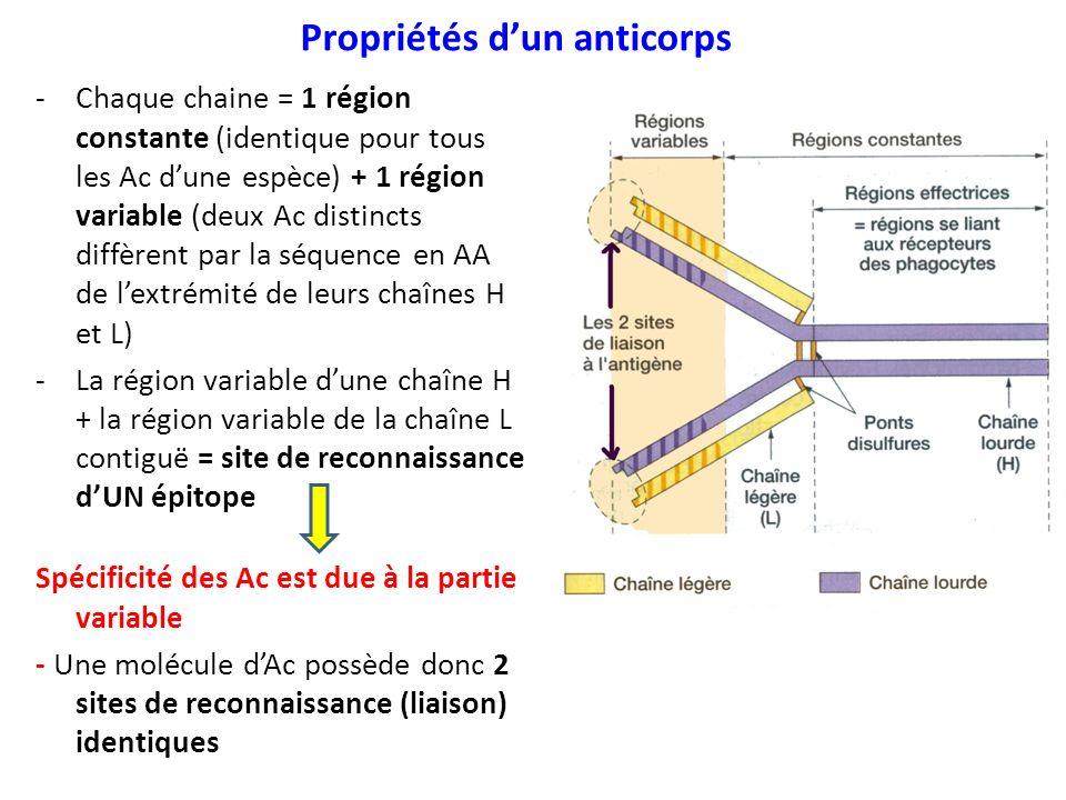 Propriétés d'un anticorps