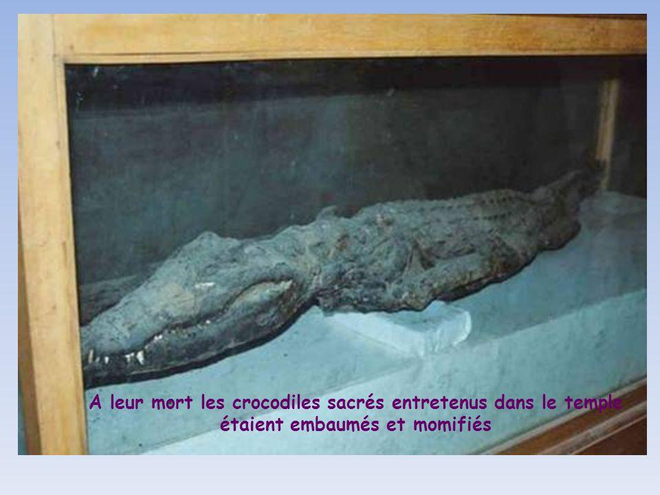 A leur mort les crocodiles sacrés entretenus dans le temple étaient embaumés et momifiés