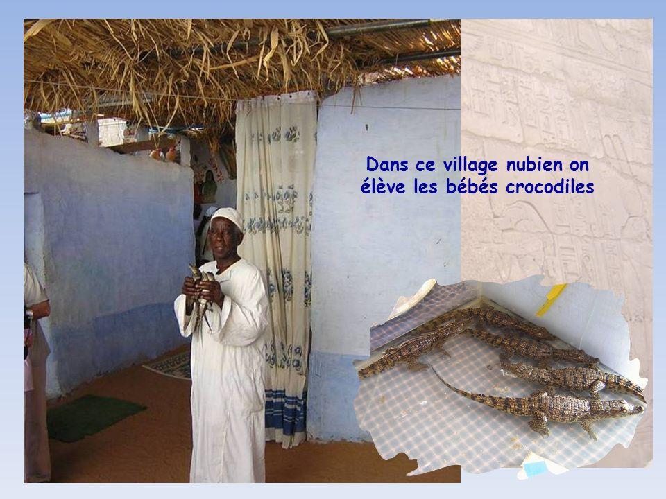 Dans ce village nubien on élève les bébés crocodiles