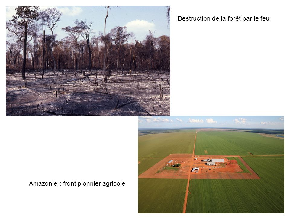 Destruction de la forêt par le feu
