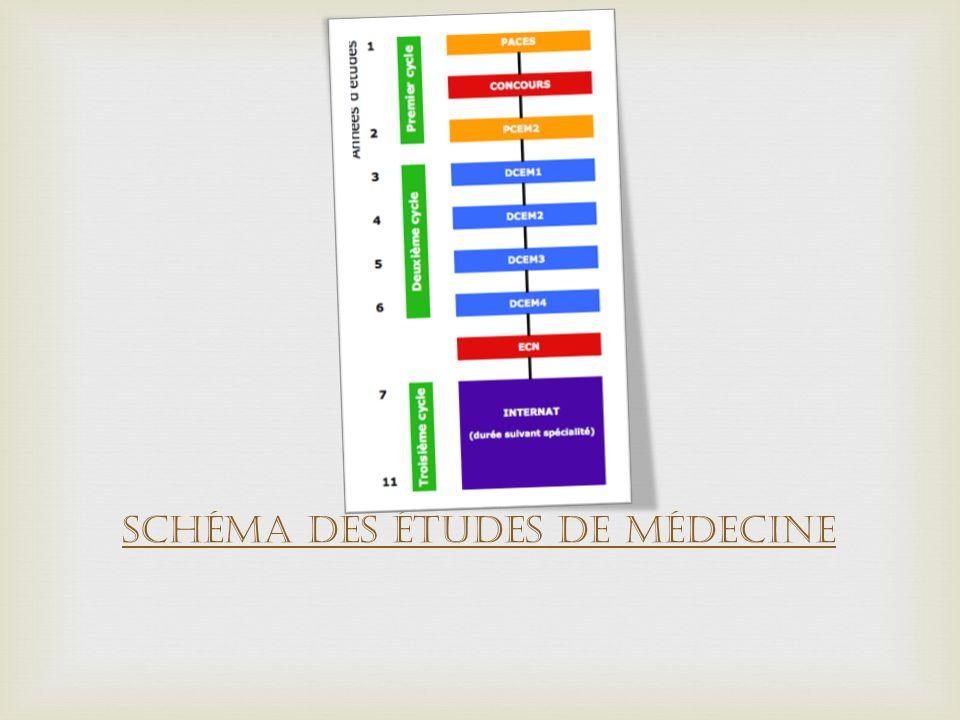 Schéma des études de médecine