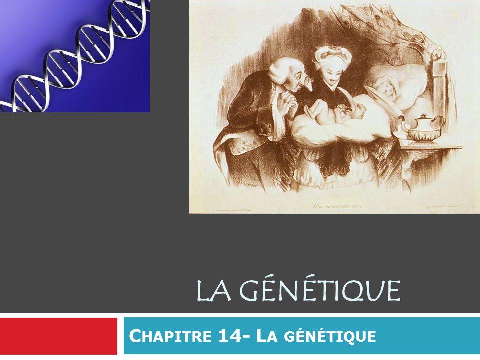 Chapitre 14- La génétique