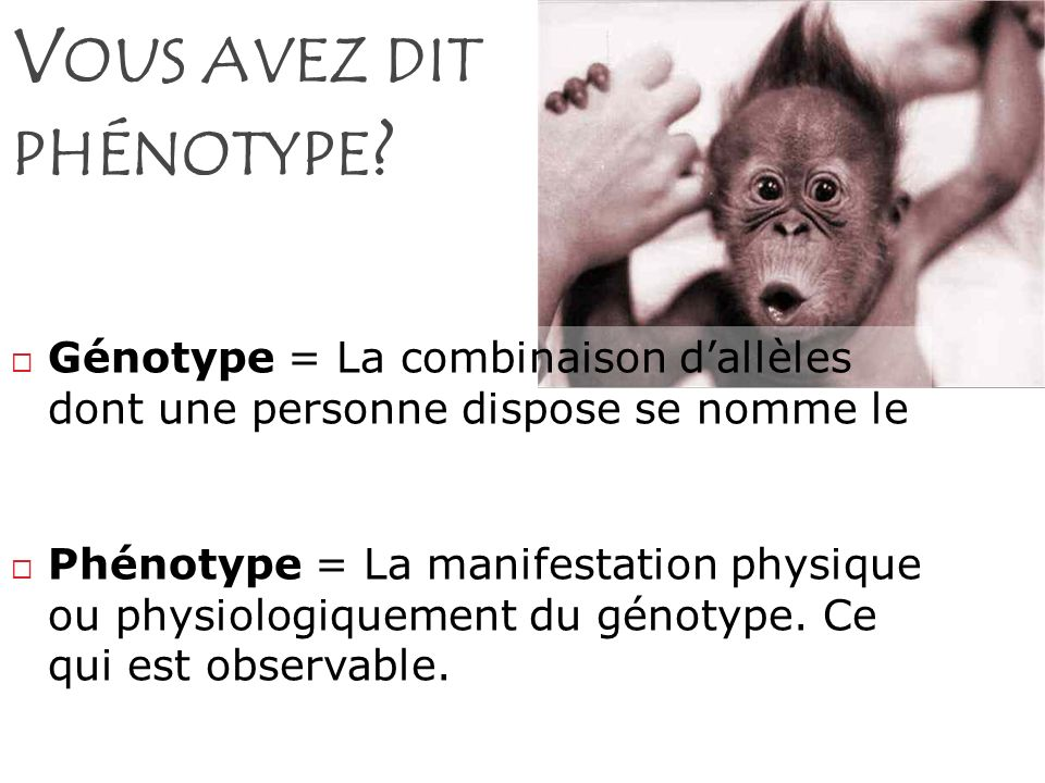 Vous avez dit phénotype
