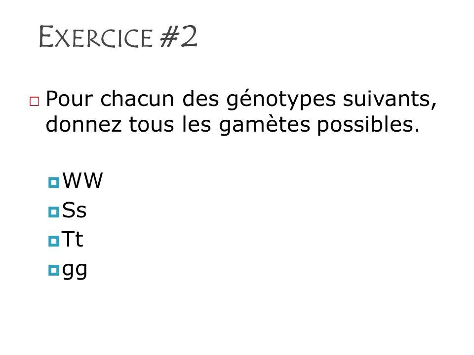 Exercice #2 Pour chacun des génotypes suivants, donnez tous les gamètes possibles. WW Ss Tt gg