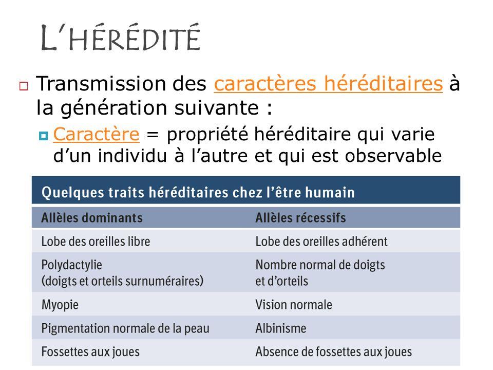L'hérédité Transmission des caractères héréditaires à la génération suivante :