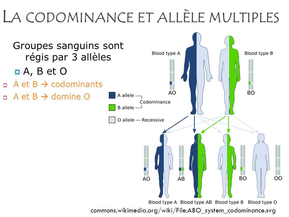 La codominance et allèle multiples