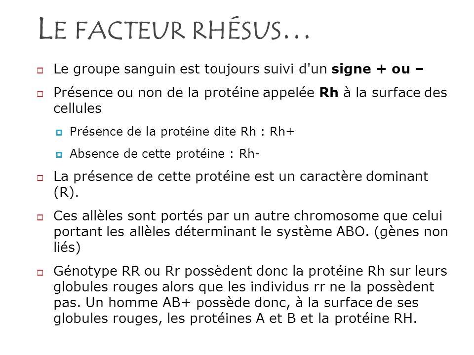 Le facteur rhésus… Le groupe sanguin est toujours suivi d un signe + ou – Présence ou non de la protéine appelée Rh à la surface des cellules.