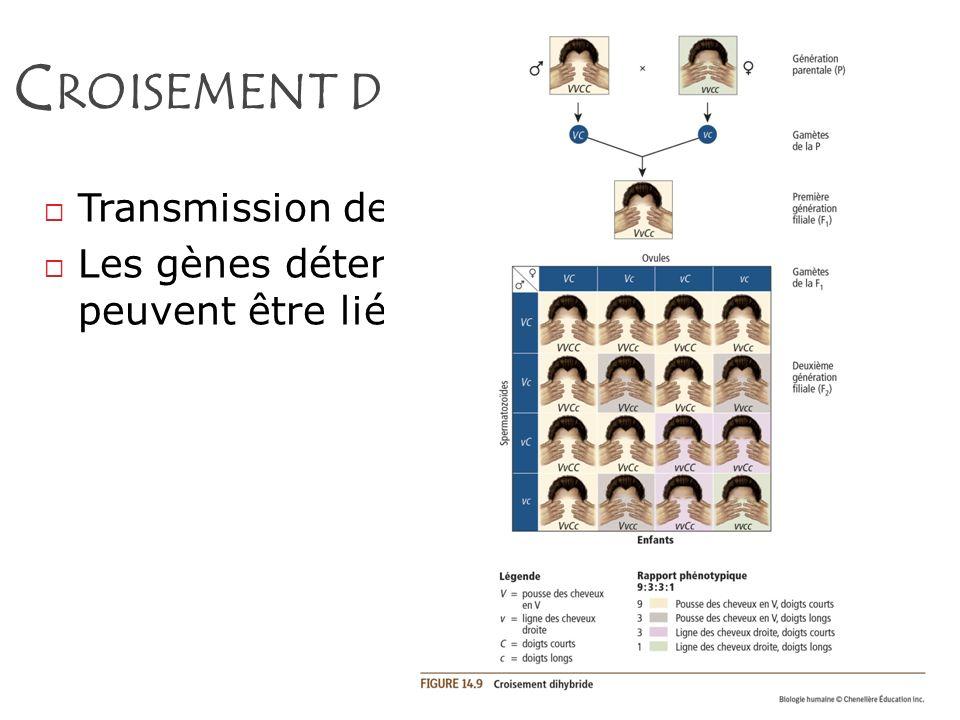 Croisement dihybride Transmission de DEUX caractères.