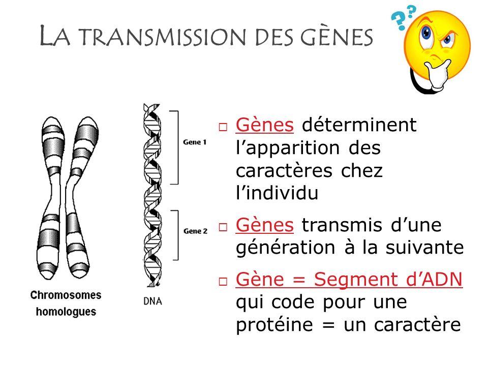 La transmission des gènes