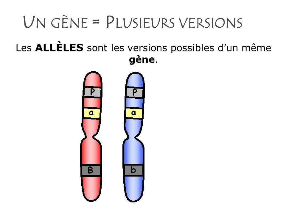 Un gène = Plusieurs versions