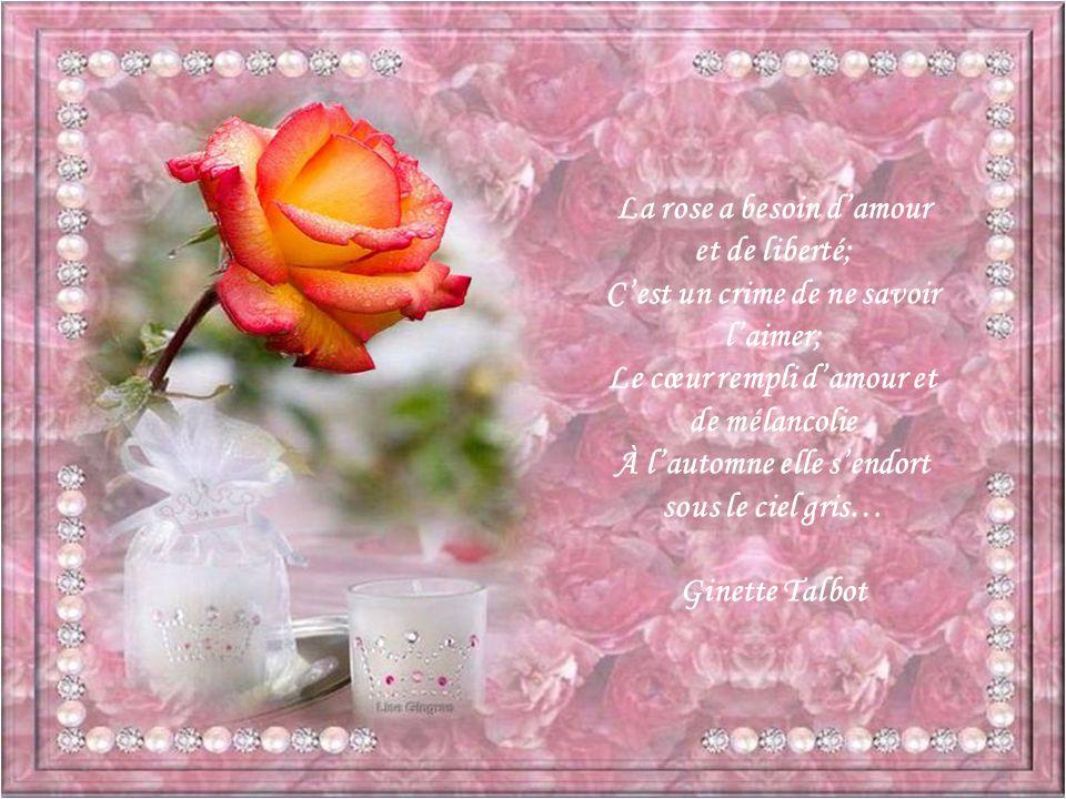 La rose a besoin d'amour et de liberté;