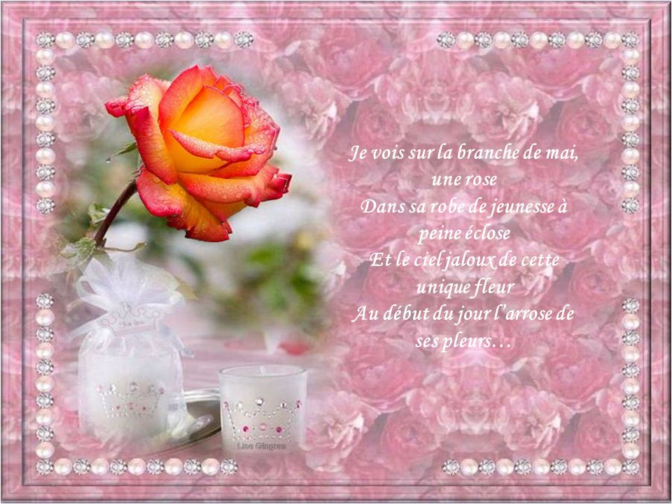 Je vois sur la branche de mai, une rose