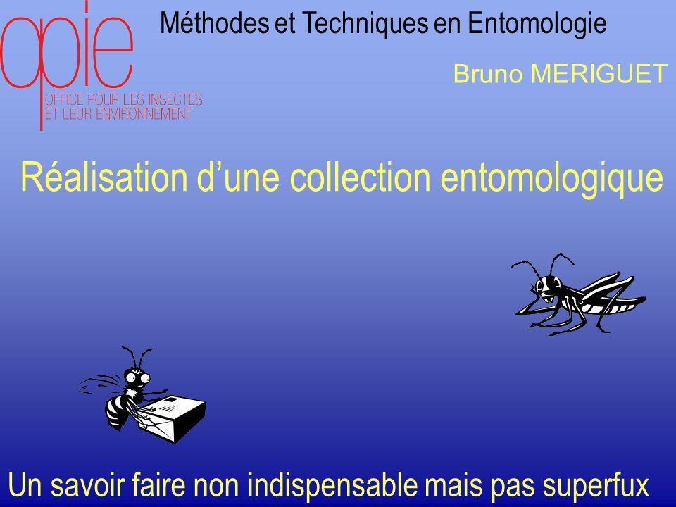 Réalisation d'une collection entomologique
