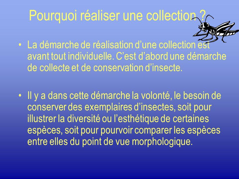 Pourquoi réaliser une collection