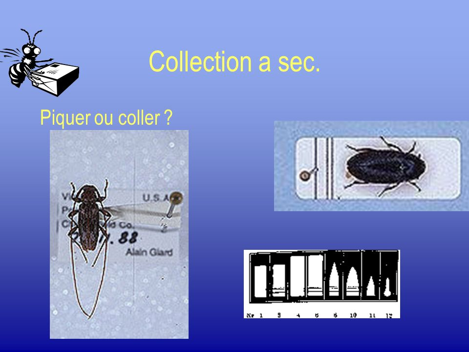 Collection a sec. Piquer ou coller