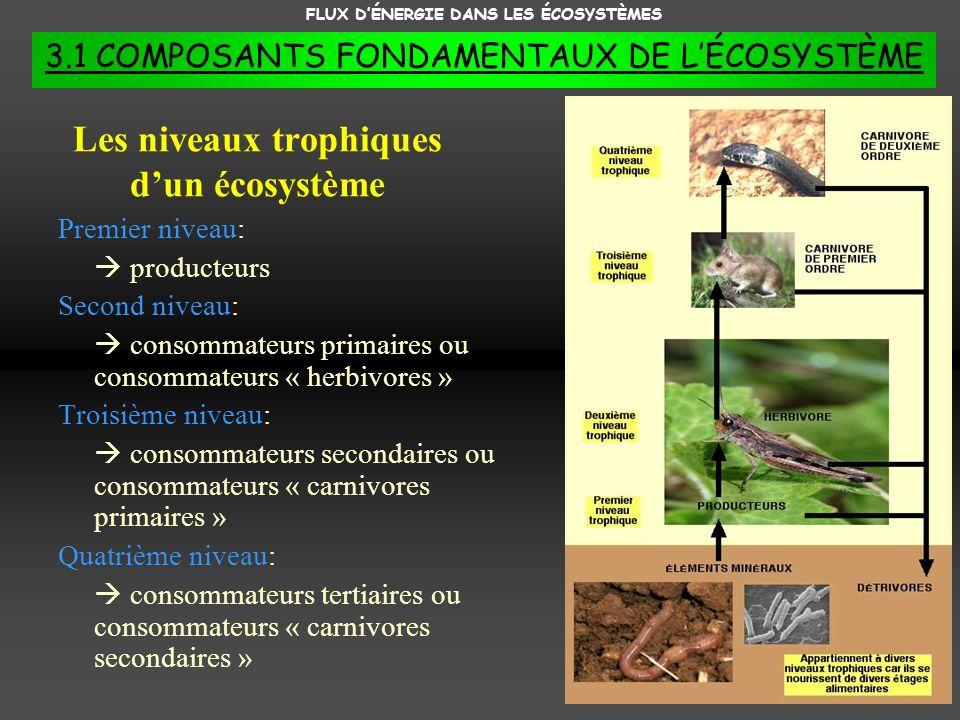 Les niveaux trophiques d'un écosystème