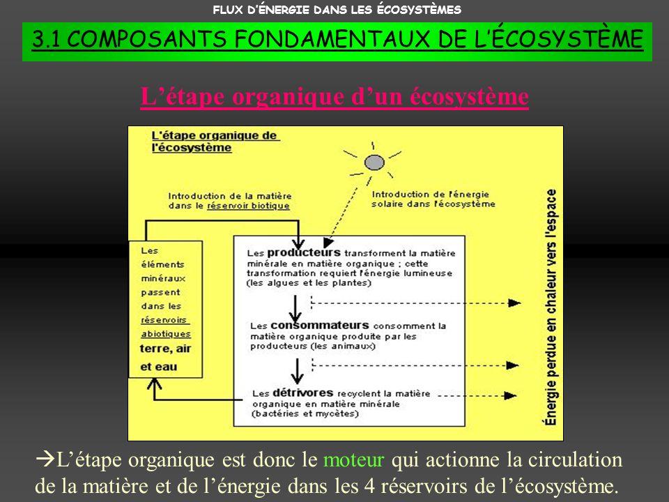 L'étape organique d'un écosystème