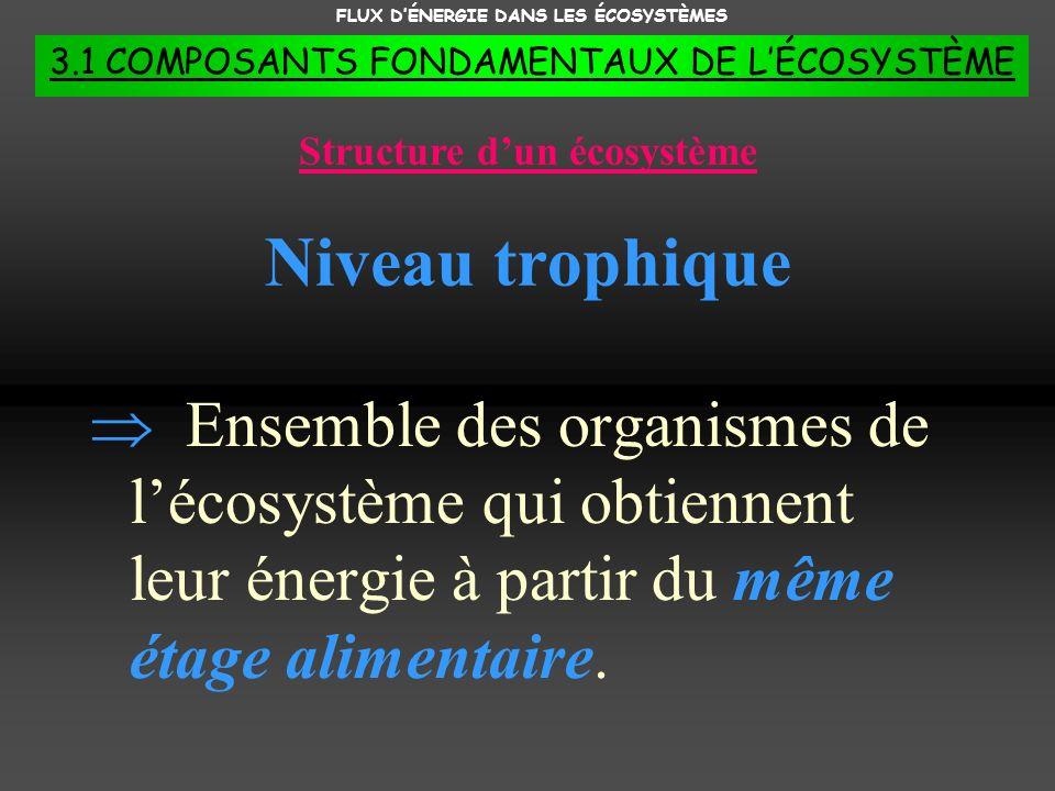 FLUX D'ÉNERGIE DANS LES ÉCOSYSTÈMES Structure d'un écosystème