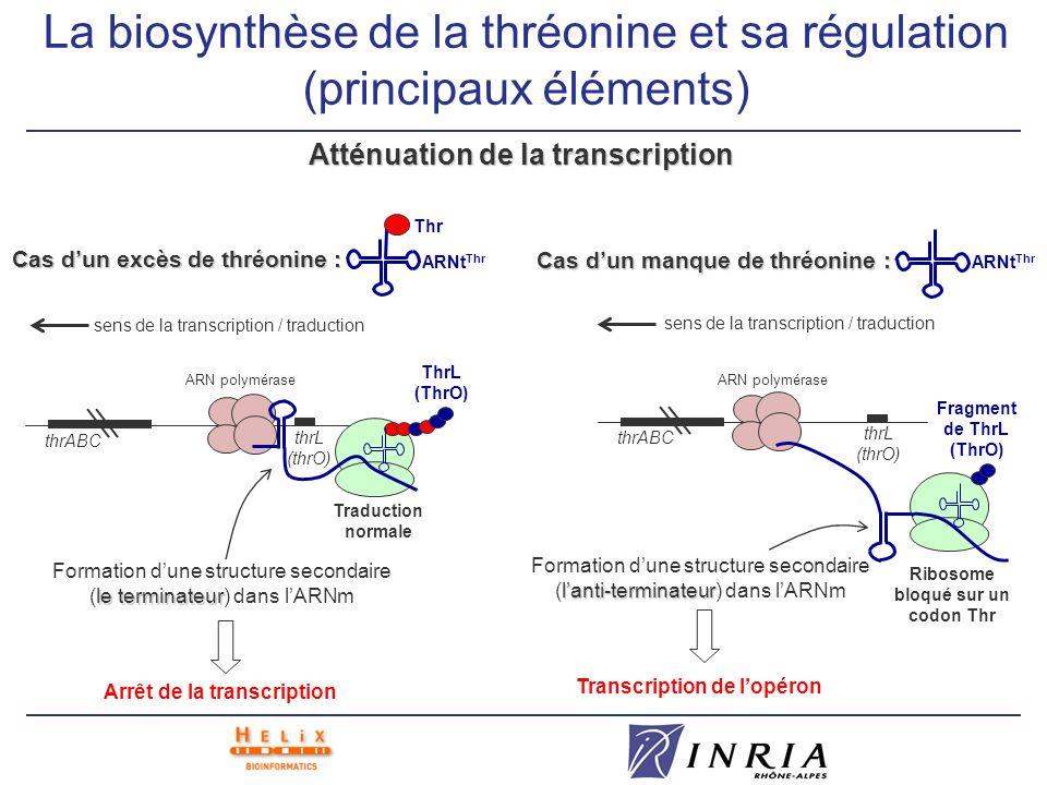 La biosynthèse de la thréonine et sa régulation (principaux éléments)