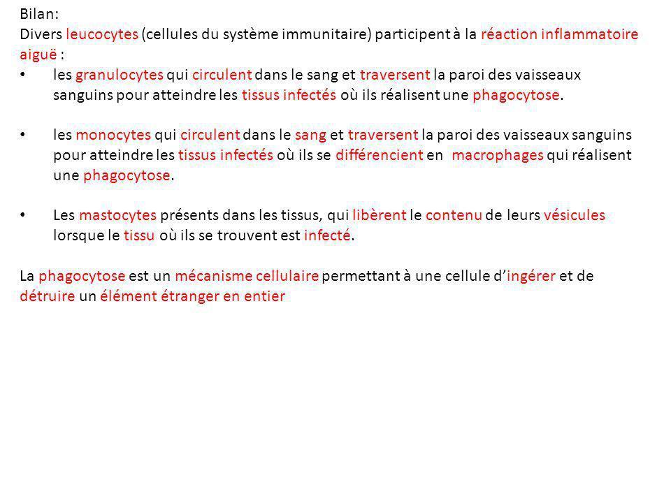 Bilan: Divers leucocytes (cellules du système immunitaire) participent à la réaction inflammatoire aiguë :