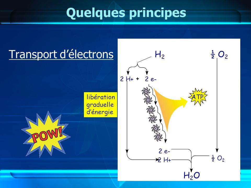 Quelques principes KaBoOM !! Transport d'électrons H2 ½ O2 H2O 2 H+