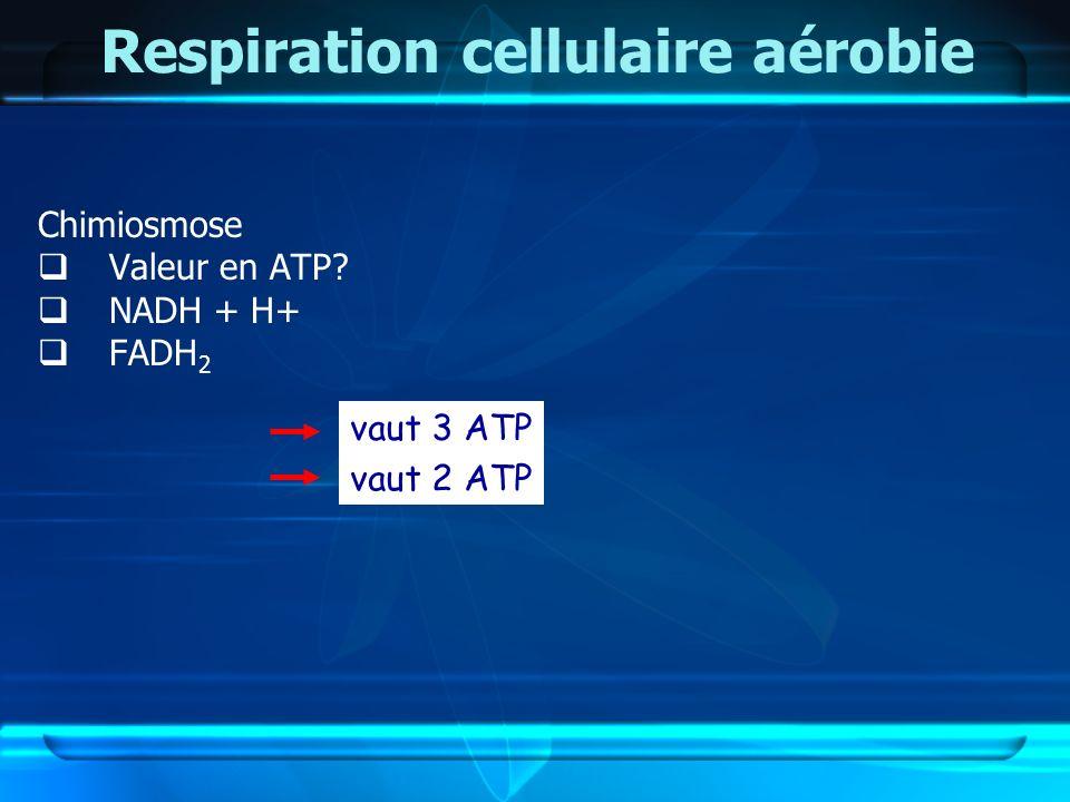 Respiration cellulaire aérobie