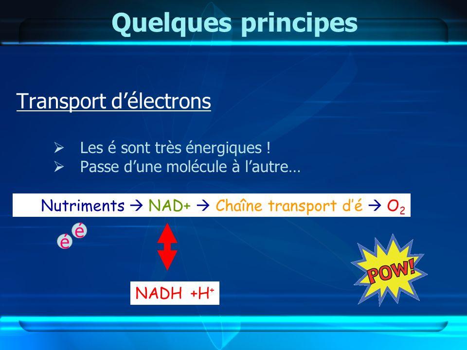 Quelques principes Transport d'électrons é é