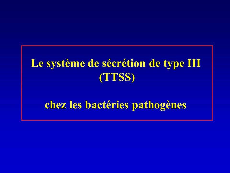 Le système de sécrétion de type III chez les bactéries pathogènes