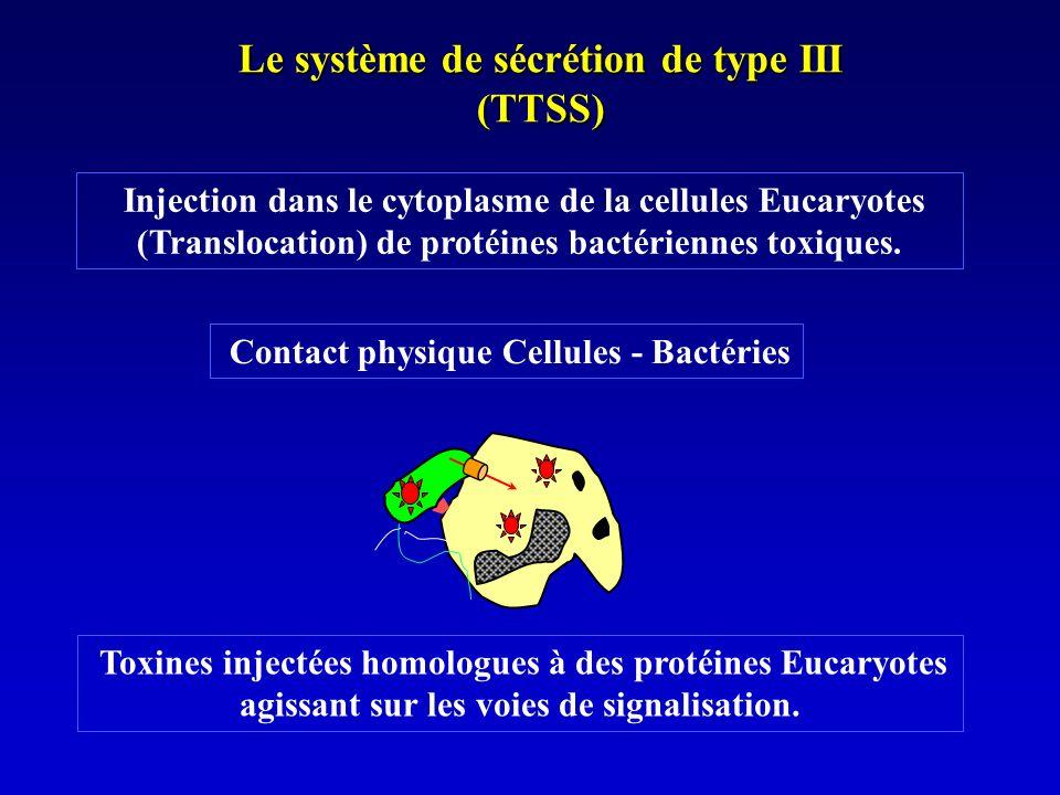 Le système de sécrétion de type III (TTSS)