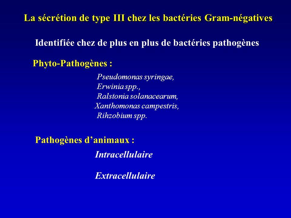 La sécrétion de type III chez les bactéries Gram-négatives