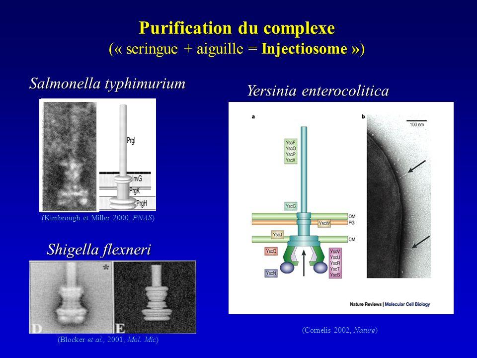 Purification du complexe