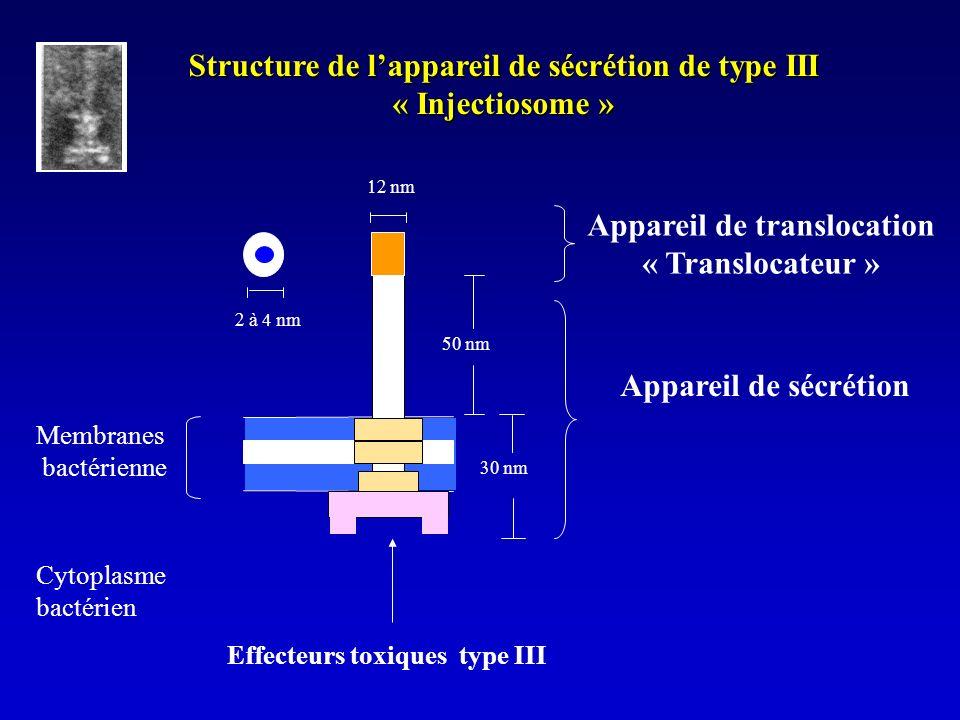 Structure de l'appareil de sécrétion de type III « Injectiosome »