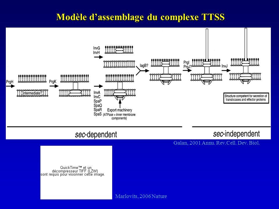 Modèle d'assemblage du complexe TTSS