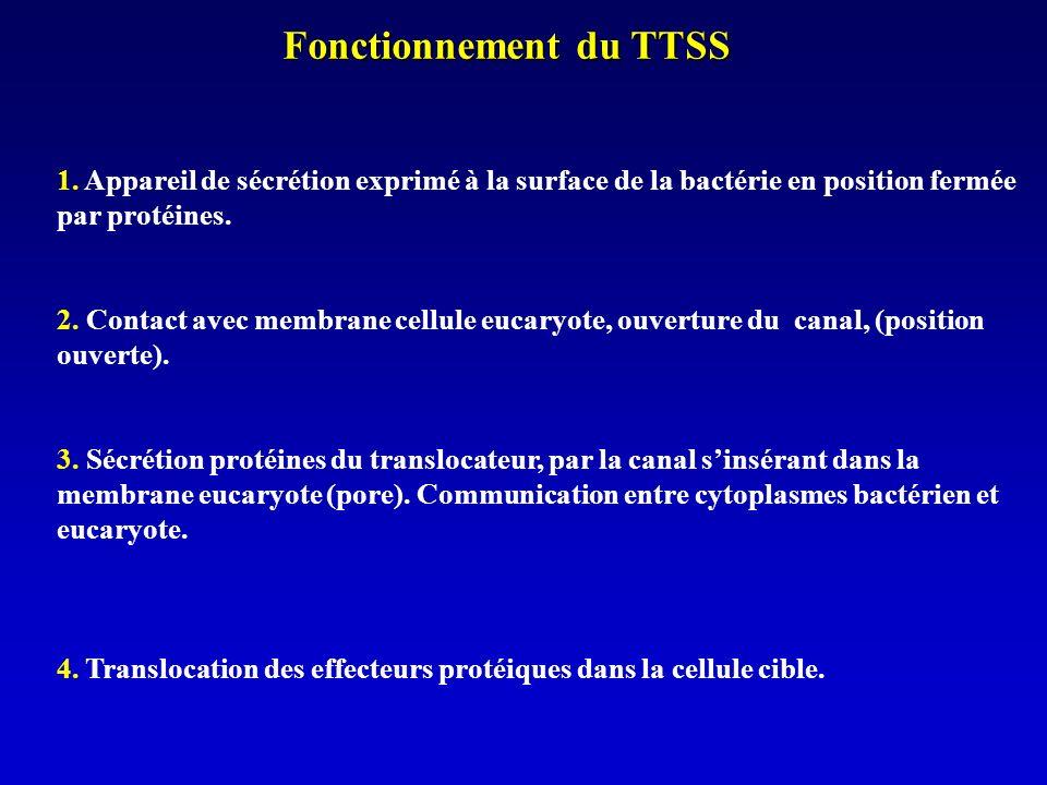 Fonctionnement du TTSS