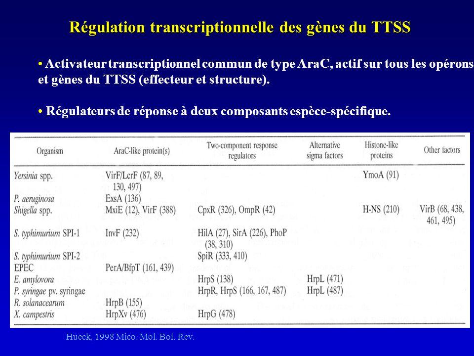 Régulation transcriptionnelle des gènes du TTSS