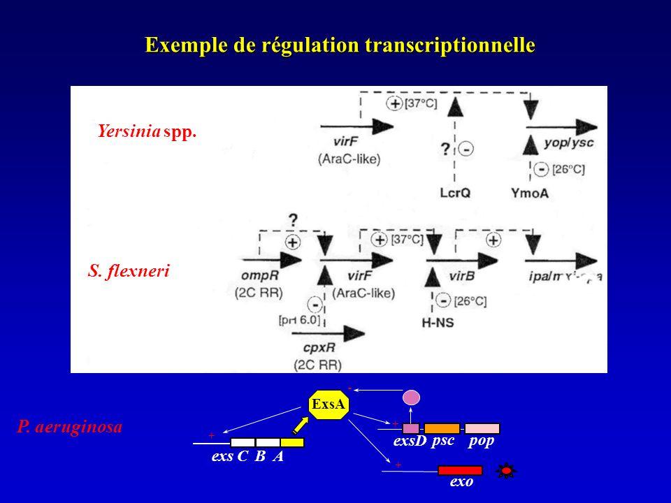 Exemple de régulation transcriptionnelle