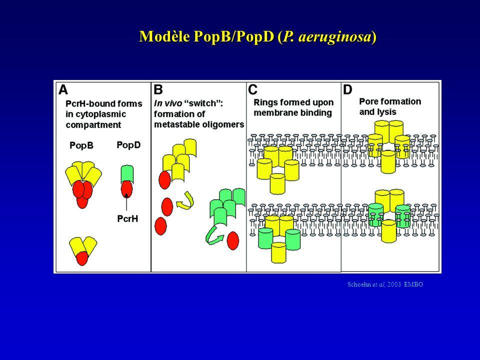 Modèle PopB/PopD (P. aeruginosa)