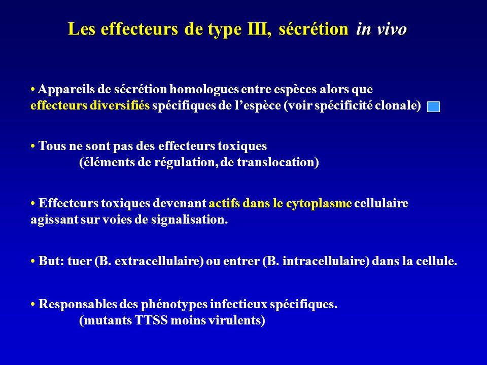 Les effecteurs de type III, sécrétion in vivo