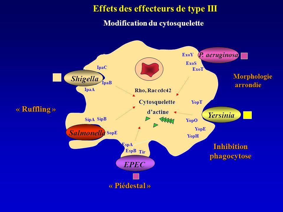 Effets des effecteurs de type III