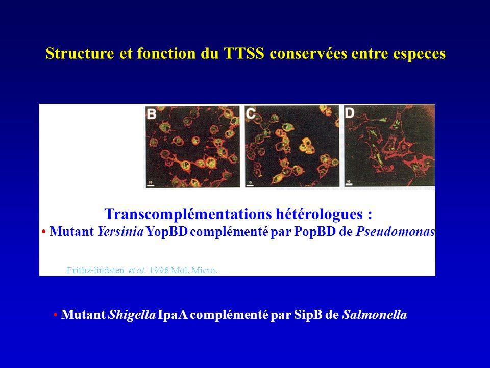 Structure et fonction du TTSS conservées entre especes