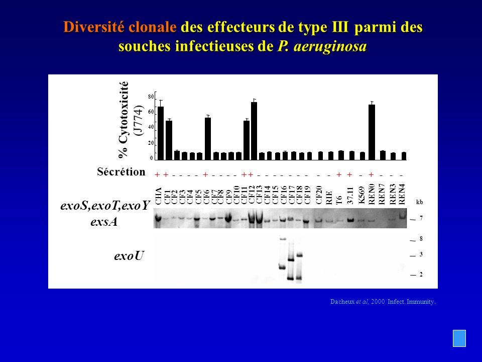 Diversité clonale des effecteurs de type III parmi des souches infectieuses de P. aeruginosa
