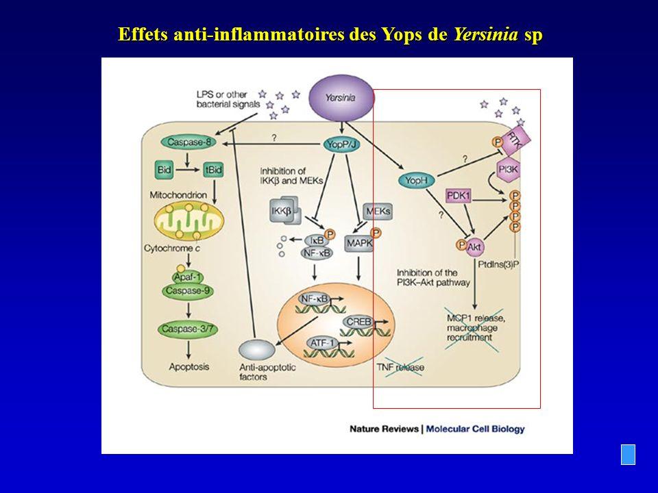 Effets anti-inflammatoires des Yops de Yersinia sp