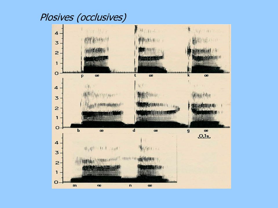 Plosives (occlusives)